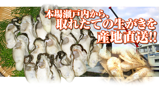 本場瀬戸内から生がきを産地直送!! 相生牡蠣