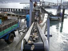 牡蠣を一次洗浄